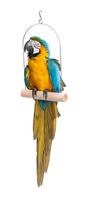 Houpačka ptačí dřevěná maxi
